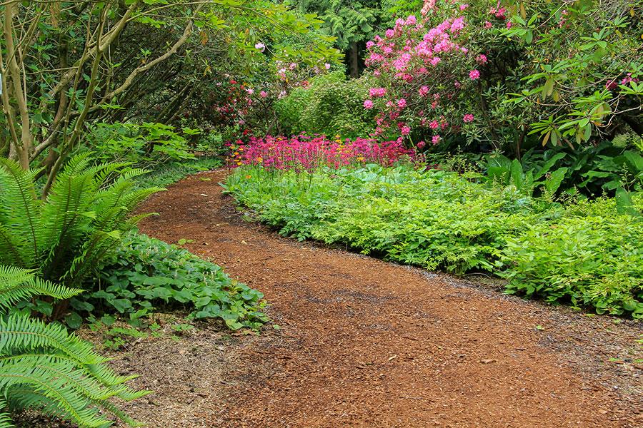 Växter för woodland